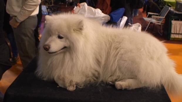 Fiera Cani a Padova Expo Internazionale: Date, info e biglietti