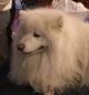 Fiera Cani a Padova: Expo Internazionale 29 e 30 Marzo